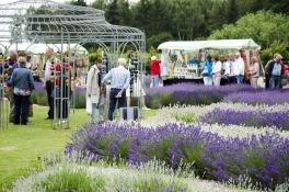 LavendelFestival2015__DSC3441ps_1600p