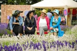LavendelFestival2015__DSC3742ps_1600p