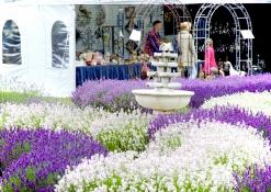 LavendelFestival2015__DSC4124ps_1600p